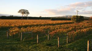 Photo looking over the On Giants' Shoulders Vineyard in Autumn