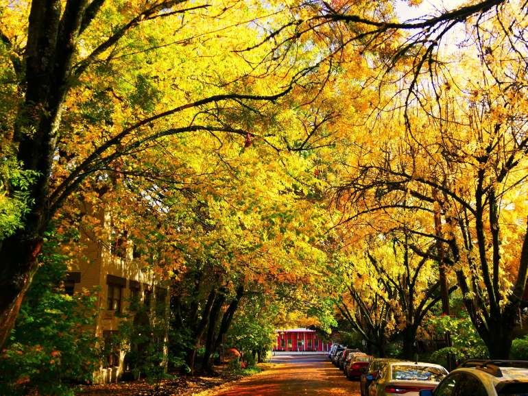 Visiter Portland pendant un road trip en Oregon