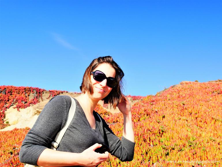 Plantes colorées à Mendocino en Californie