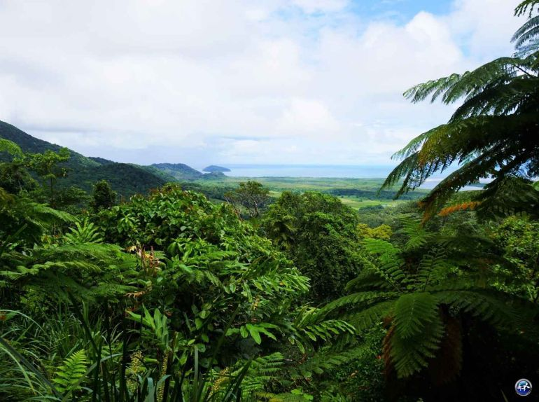 cape tribulation daintree rainforest queensland australie blog voyage suisse cosy