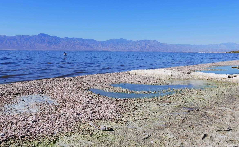 Rive polluée du Salton Sea Recreation Area Visiter la Californie