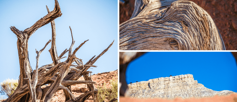 Bois morts de Kodachrome Basin