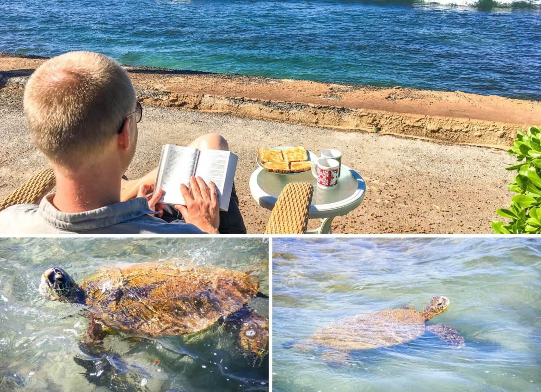 Tortues et petit déjeuner avec vue à Maui Hawaii