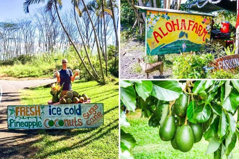 Fruits bord des route Big Island