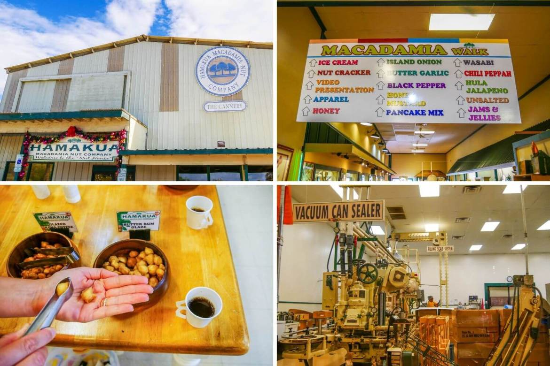 Macadamia Nut Company Big Island