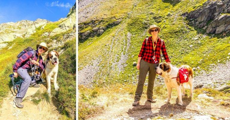 Waiana notre Saint-Bernard pour la randonnée