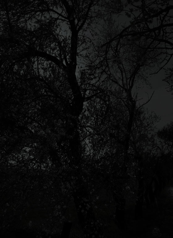 Arboles cotidianos fotografiados con la intención de captar el misterio y el mito del bosque.