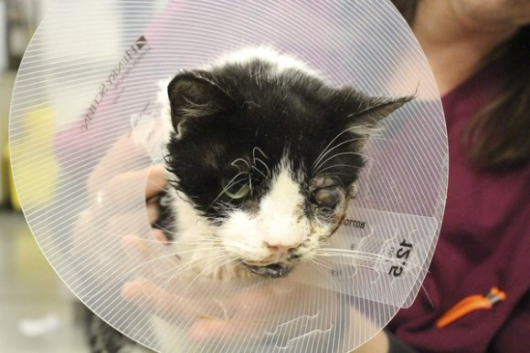 リアルジバニャン!?死んだはずの猫が、埋葬された5日後に家の前に!