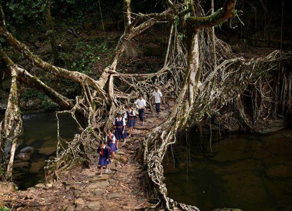 木でできた橋を渡って移動をする子供たち。インド