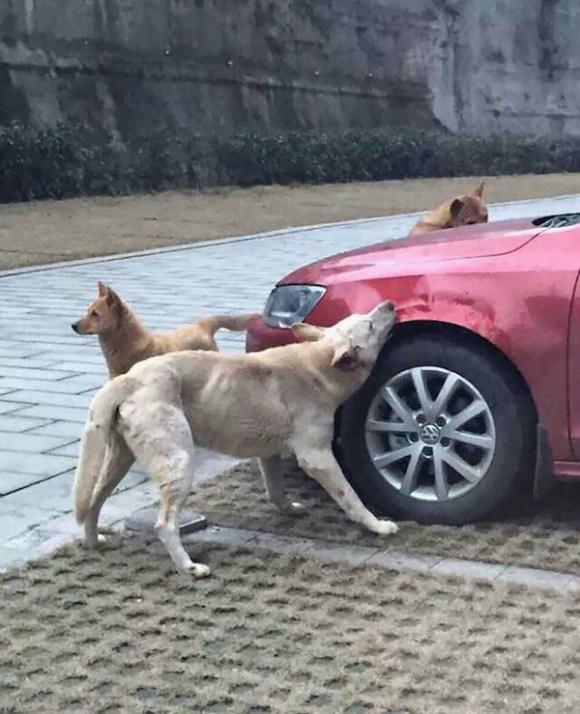 【なめとったらあかんぞ!】野良犬を蹴った男性、見事に野良犬たちの仕返しにあう。