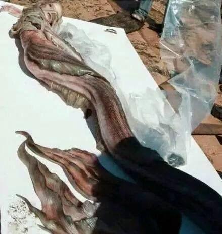 mermaid-tail