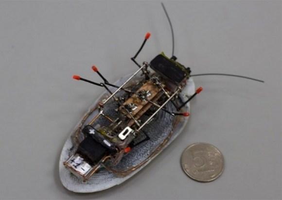 cockroach-penny-590x419