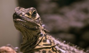 「秘密のレプタイルズ」爬虫類飼育者による感想!(ネタバレ有)