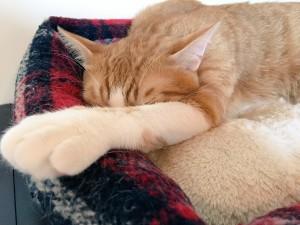 可愛い猫ちゃんがいっぱい