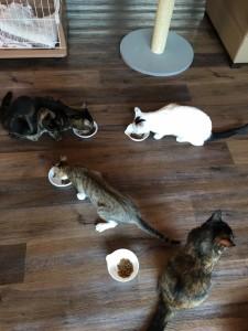 猫カフェとしての「猫家ねこ玉」