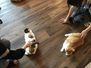 豊田の「猫家ねこ玉」