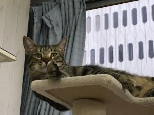 猫カフェ 桜木町 にゃんくる