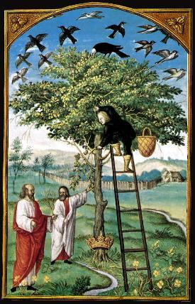 """L'albero dei filosofi nelle tavole dello """"Splendor Solis"""". La stella dei Tarocchi"""