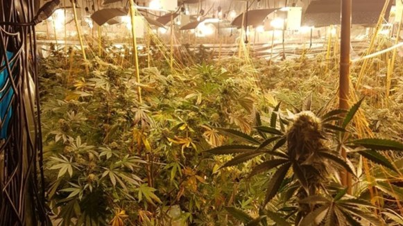 skynews-cannabis-farm-coventry-cannabis-farm_5141236