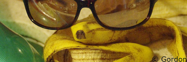 SEO service slip ups are like banana peels