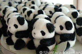 panda-panda-panda