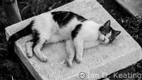 Neighborhood-Cat