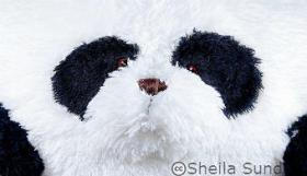 Huggable-Panda