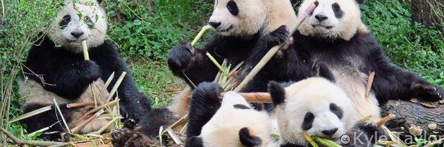 panda 4.0 is the next generation of Panda