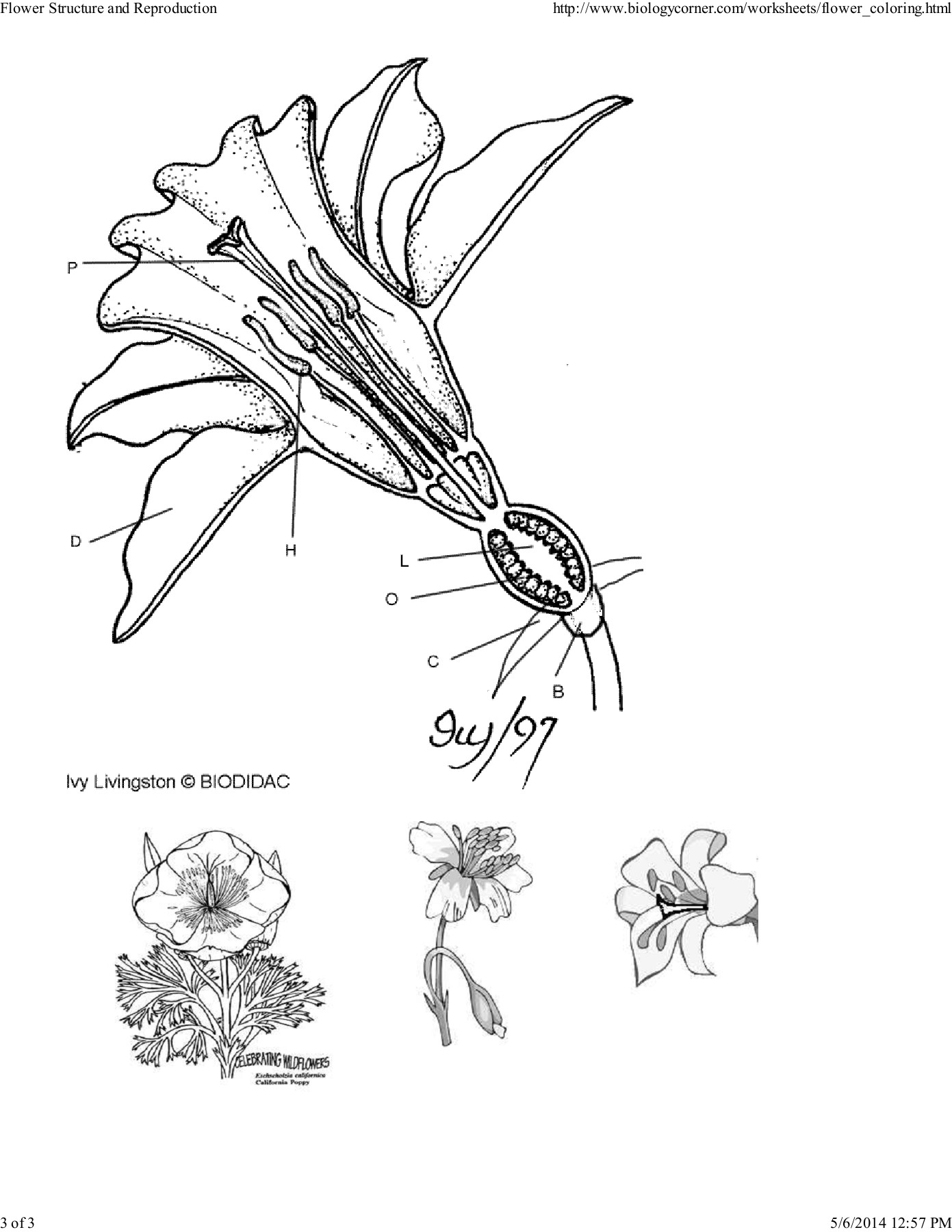 Flower Structure Worksheet Answers