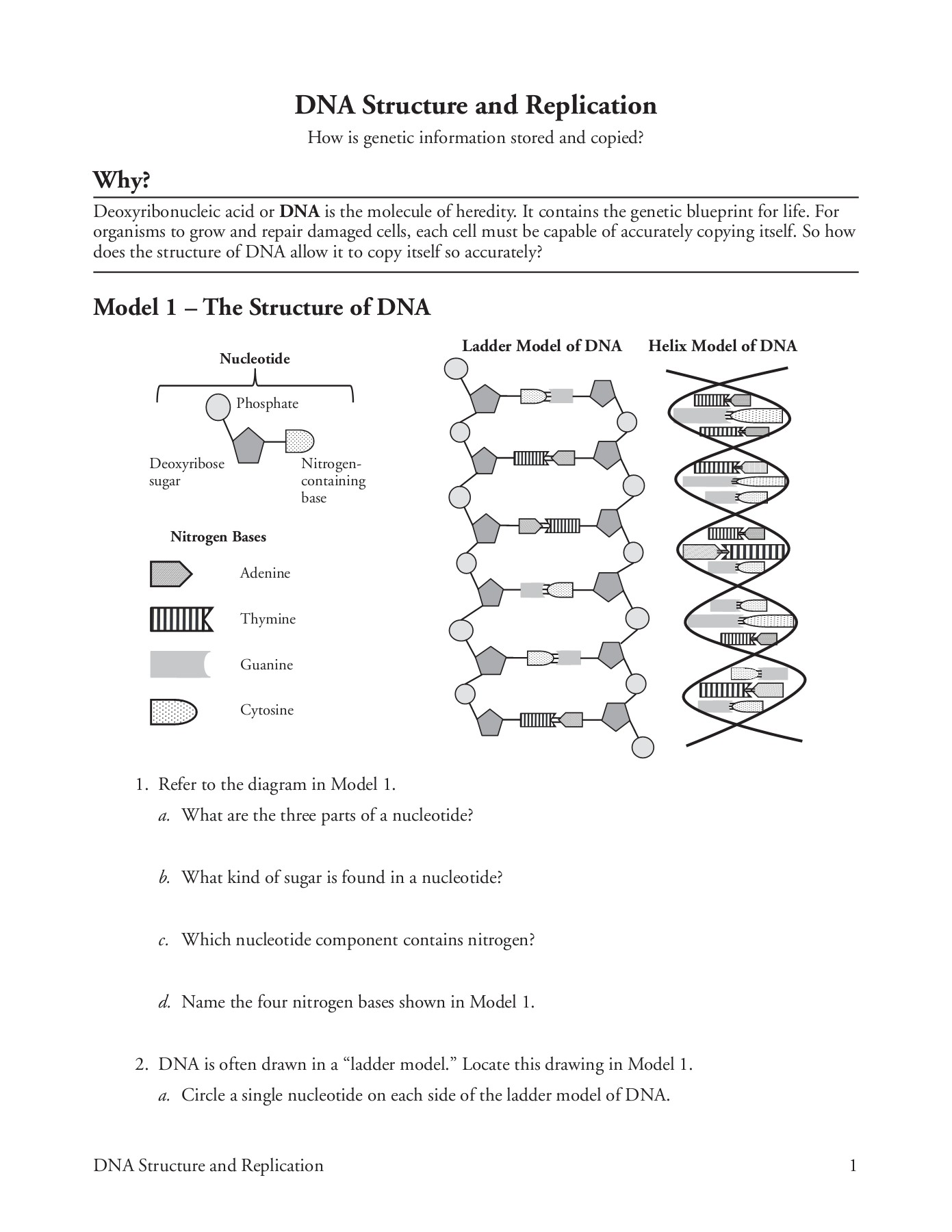 Dna Structure Worksheet Answer