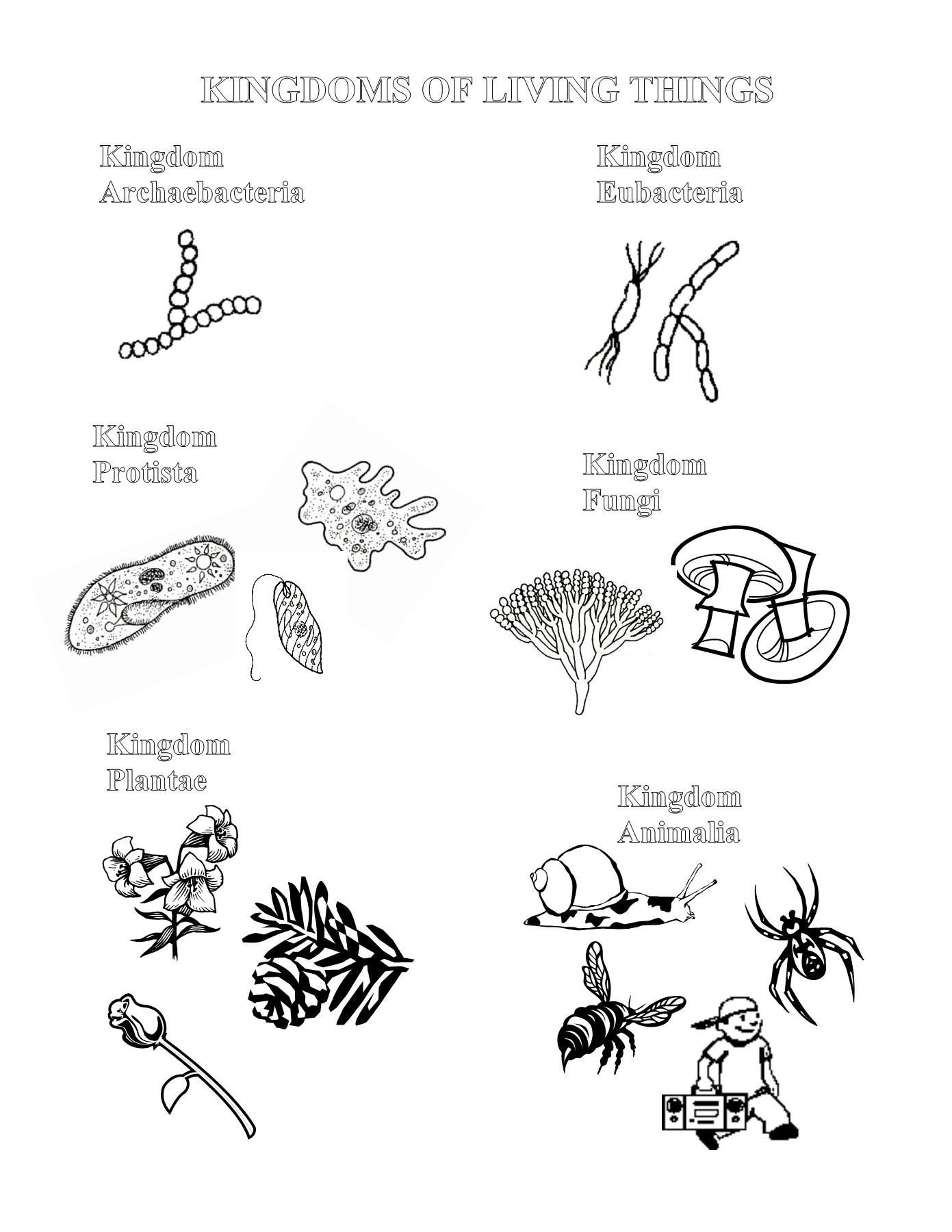 32 Fungi Coloring Worksheet Answer Key
