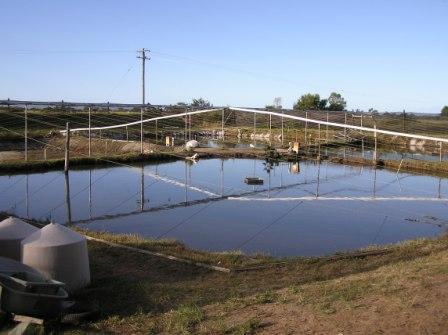 Searle Aquaculture