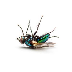 ηλεκτρικά εντομοκτόνα - απωθητικά και παγίδες