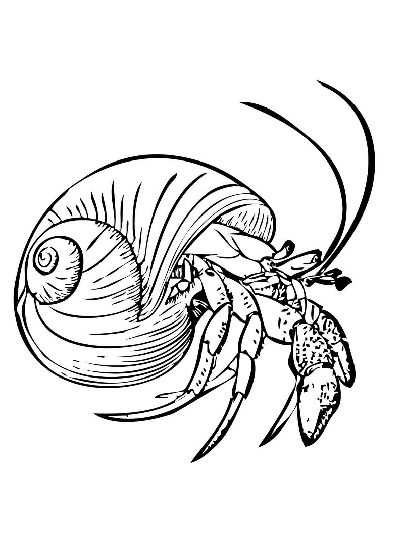 Common Hermit Crab Or Soldier Crab Coloring Page Online Coloring Pages