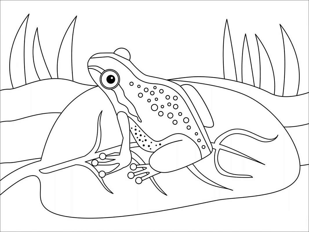 Top 20 Printable Amphibian Coloring Pages