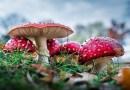 11 Apostilas sobre Fungos para Baixar em PDF