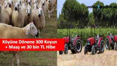 Photo of Köyüne Dönene 300 Koyun + Maaş ve 30 bin TL Hibe