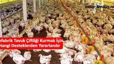 Photo of Prefabrik Tavuk Çiftliği Kurmak İçin Hangi Desteklerden Yararlanılır