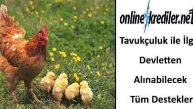Photo of Tavuk Çiftliği ile İlgili Devletten Alınabilecek Destekler