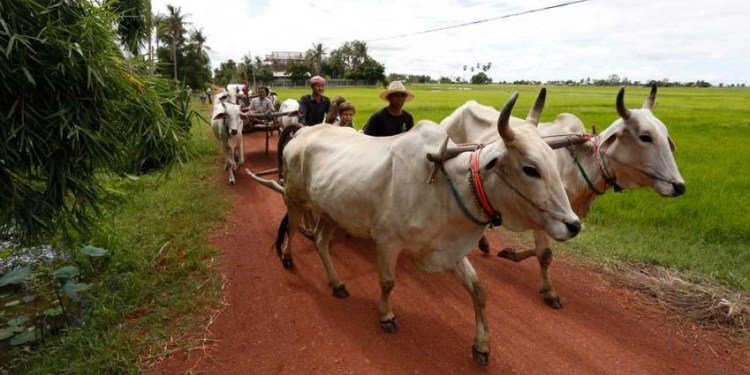 AGRO-TOURISM TAKES VISITORS BACK TO A BYGONE ERA IN CAMBODIAN HISTORY