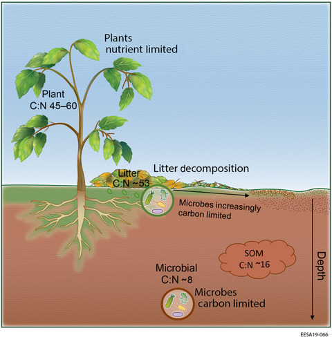 Microbial carbon limitation: The need for integrating ...