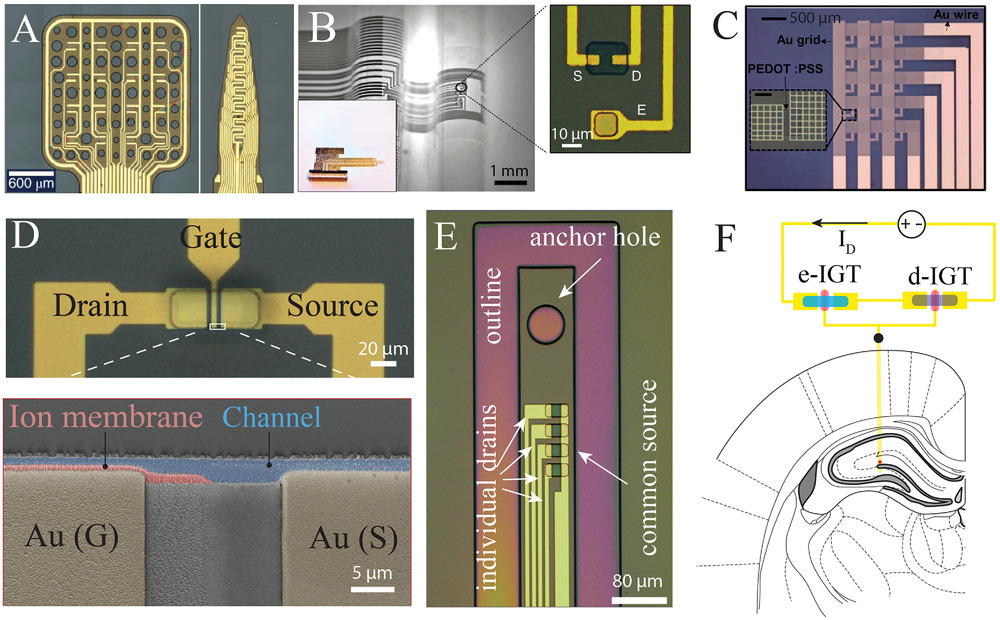 translational neuroelectronics