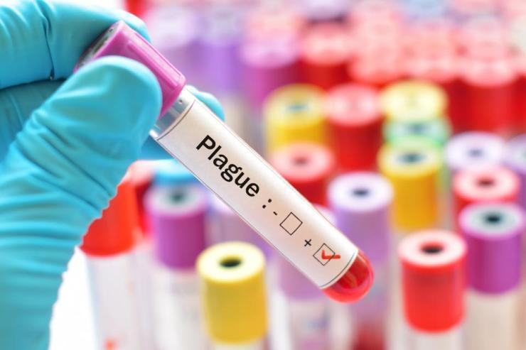 Plague disease positive