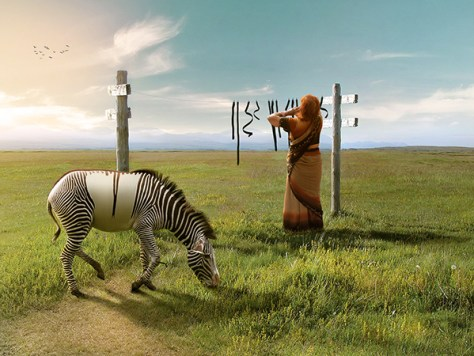 anil zebra