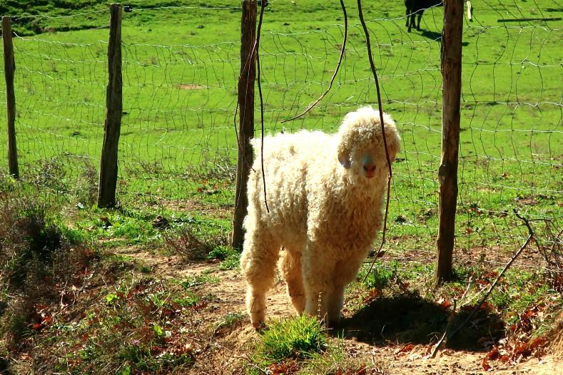 blog lifestyle toulouse animal - Le Parc Animalier Saint Michel