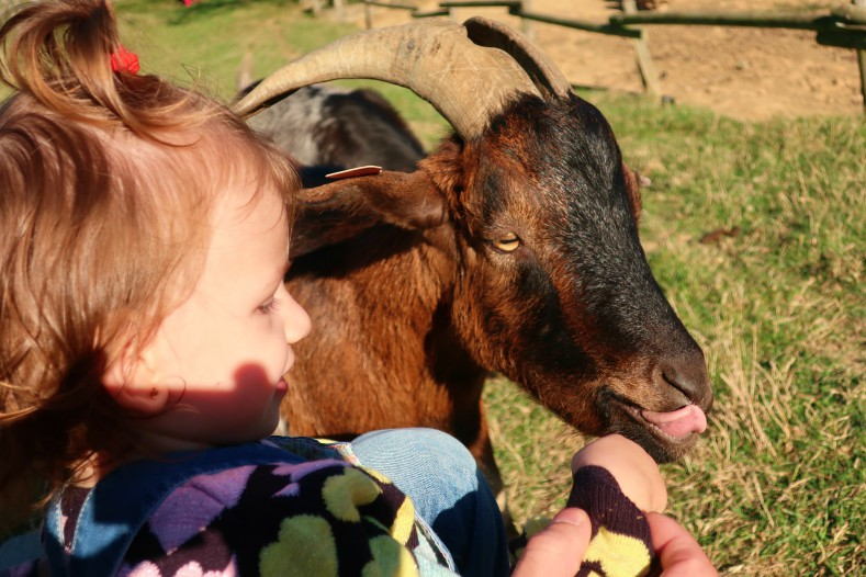 blog lifestyle toulouse bébé et animal - Le Parc Animalier Saint Michel