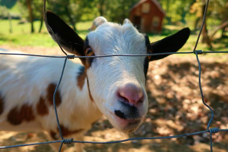 blog toulouse lifestyle  - Le Parc Animalier Saint Michel