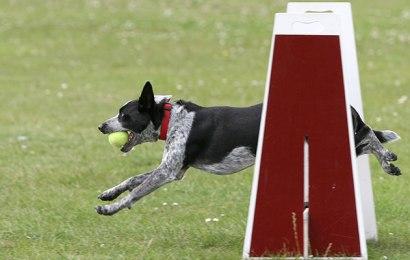Six Dog Training Tips to Modify Negative Behavior