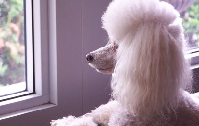 Dog Care Products for the Long Haired Dog