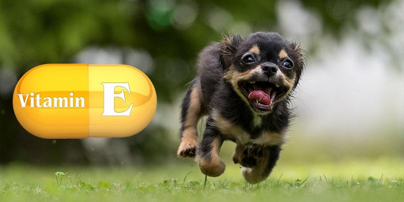 Vitamin E for Dogs – The Benefits of Vitamin E for Dogs